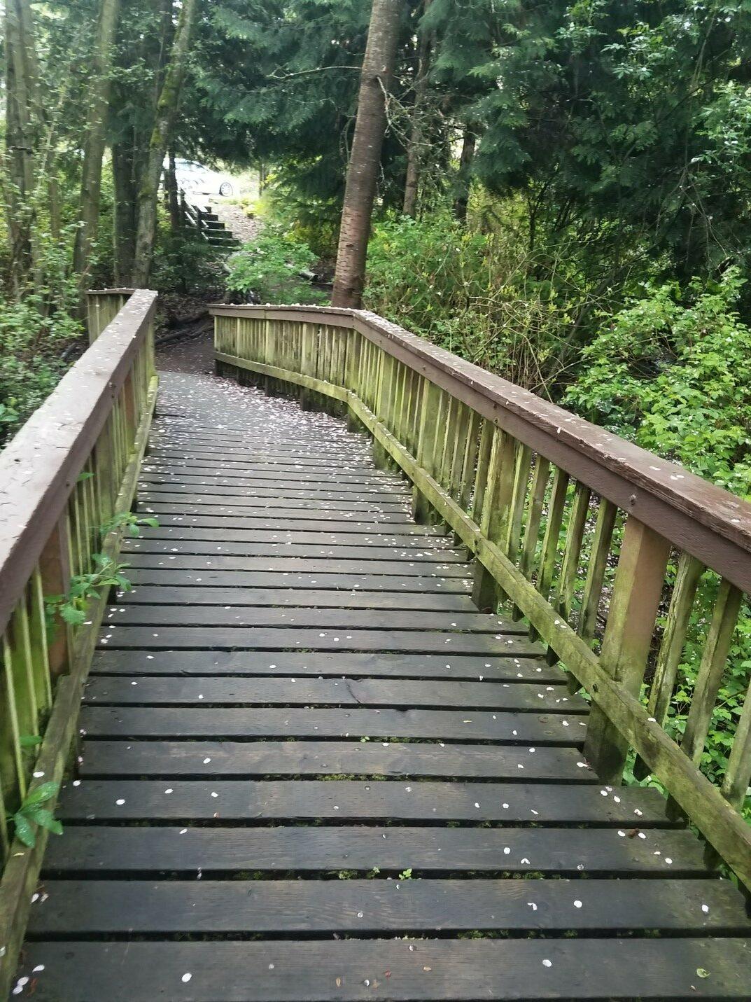 Thorton Creek bridge